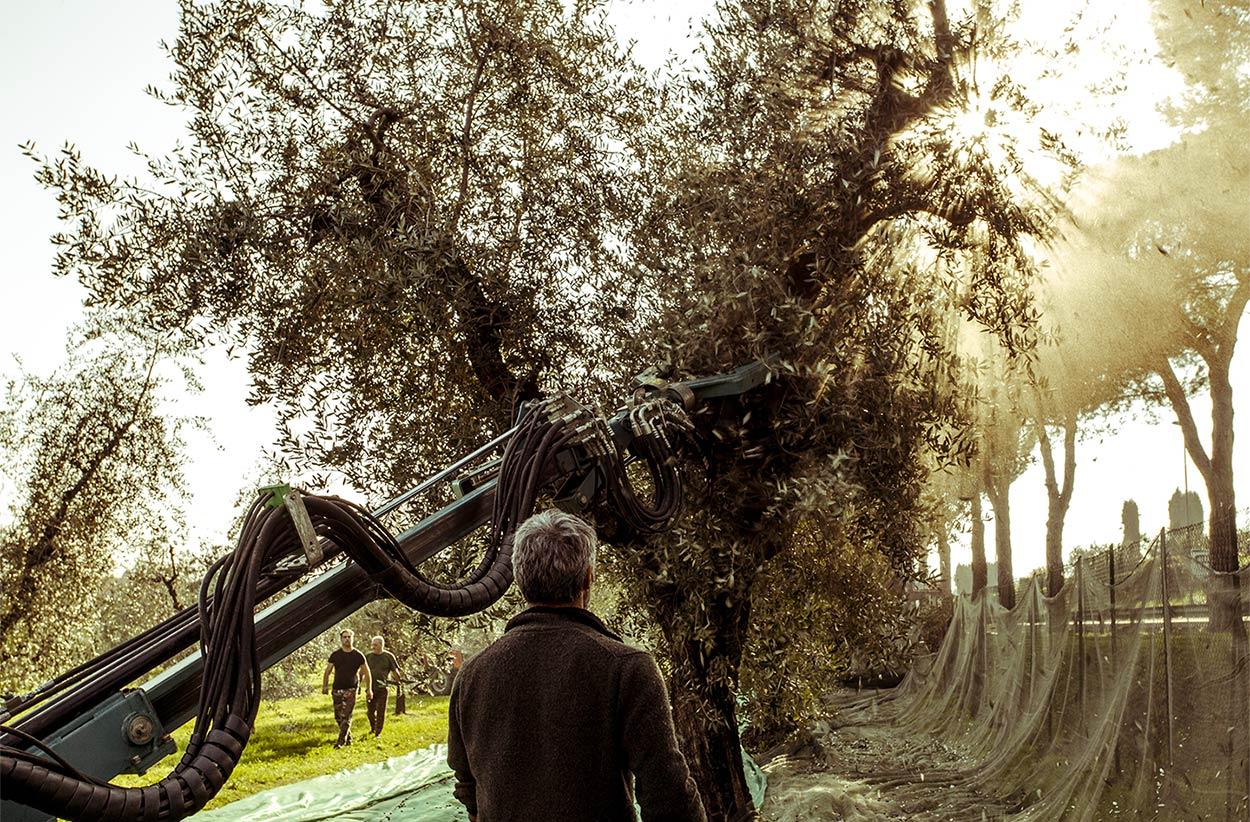La storia  Azienda Agricola Cavazza sul lago di Garda