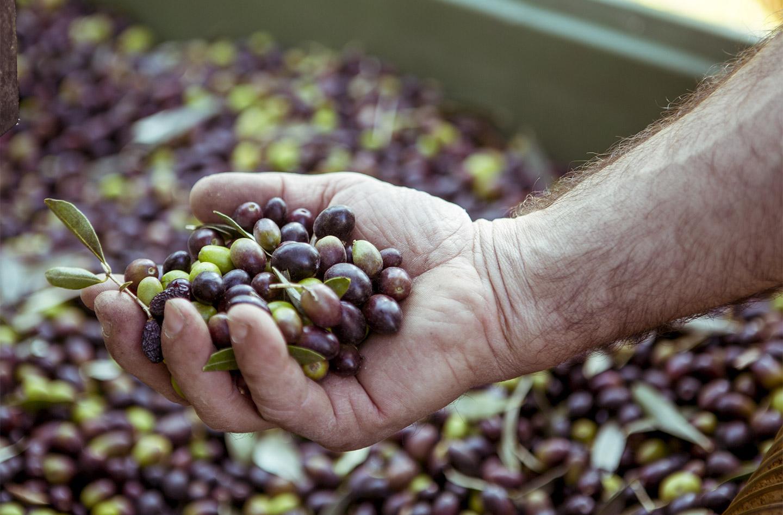 Azienda Agricola Cavazza - Produzione Extravergine di Oliva sul Lago di Garda